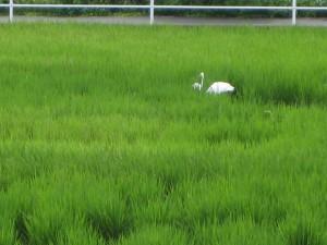 稲沢市 野鳥