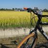 稲沢市の田園風景