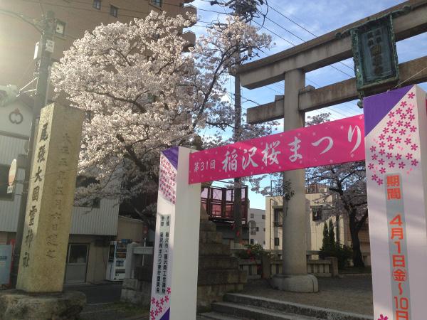 国府宮神社の桜