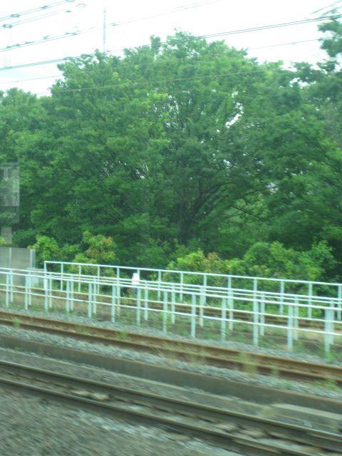総武線から見たスカイツリー