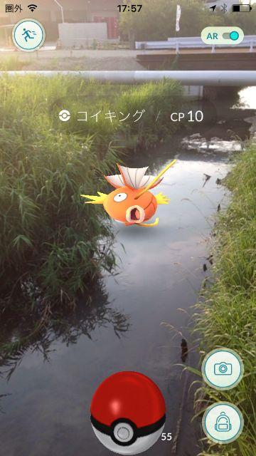 川で飛び跳ねるコイキング